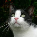 """Expo photo """"Le chats et ses photographes"""", à voir à la MEP"""