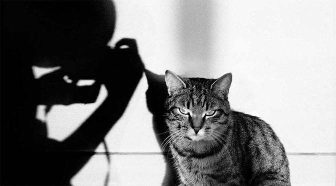"""Un chat tigré et l'ombre d'un photographe. Expo photo """"Le chats et ses photographes"""""""