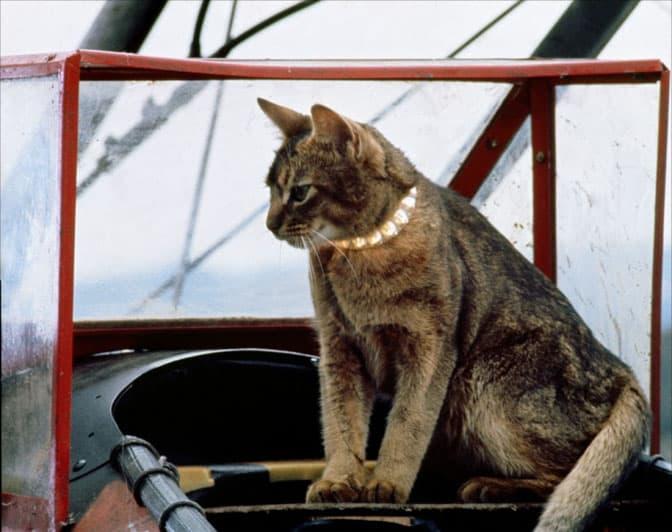 chat-qui-vient-de-l-espace-1978-02-g[1]