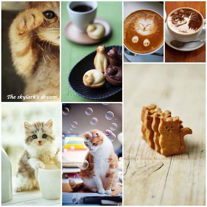 Le lait pour le chat