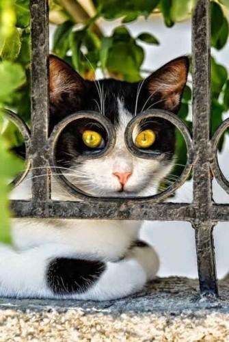 Chats des villes, chats des champs ou chats des champs