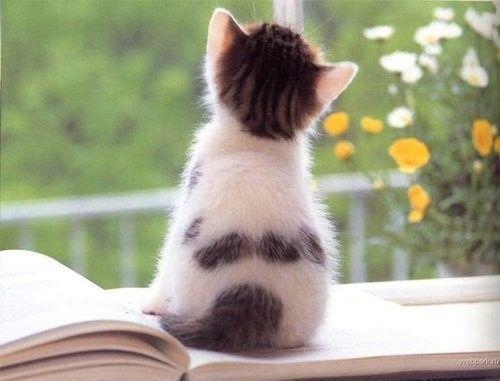 Les neufs vies émotionnelles du chat