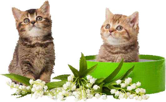 Plantes toxiques le club fran ais du sacr de birmanie for Plante toxique chat
