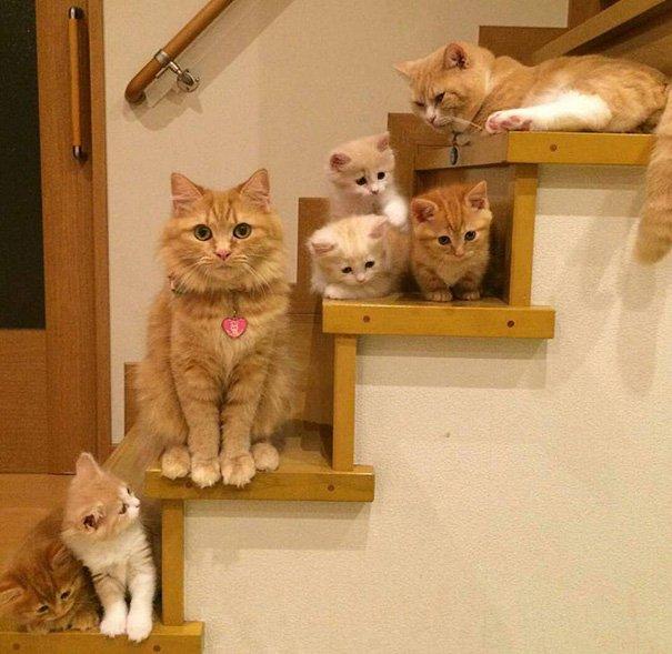 La mère chatte