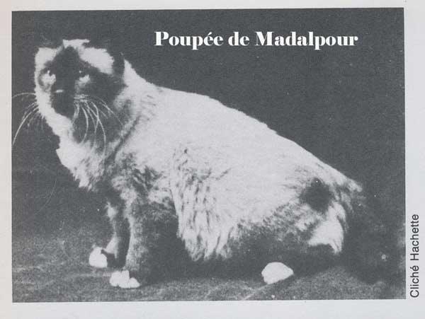 Poupée de Madalpour